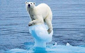 polar bear on shrinking iceberg
