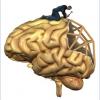 BrainInjuredDisability-AlFoxx